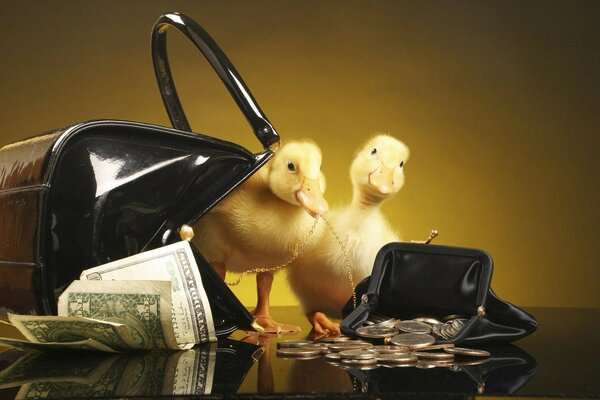Ducklings with purse and money