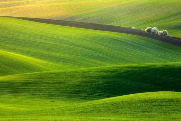 Spectacular Green Field