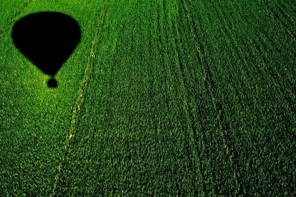 Balloon over a Cornfield