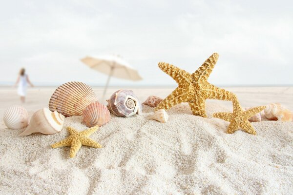 Summer Sea Shells