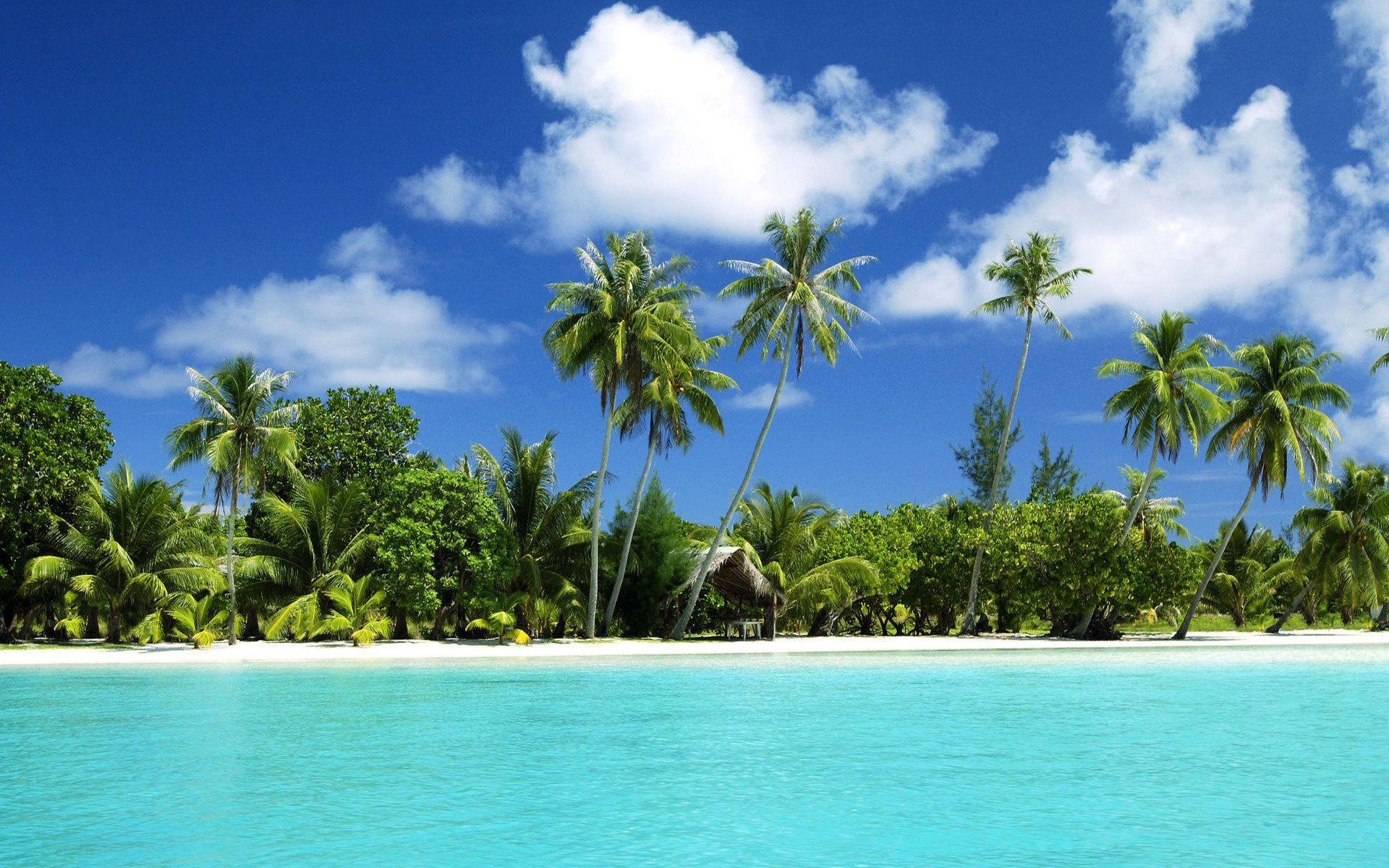 море, пляж, растительность загрузить