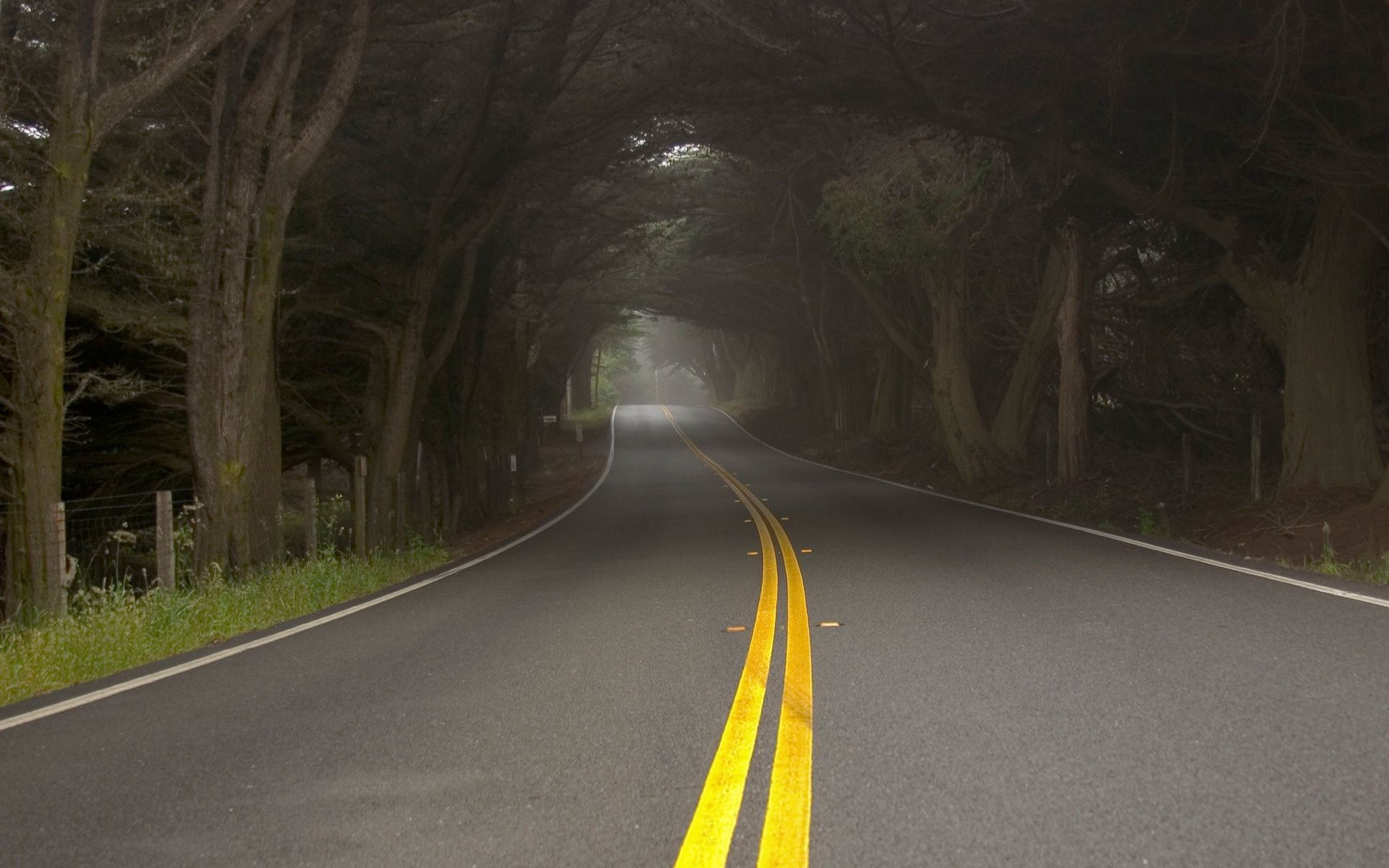 Fog Mist Nature Trees Road Android Wallpapers