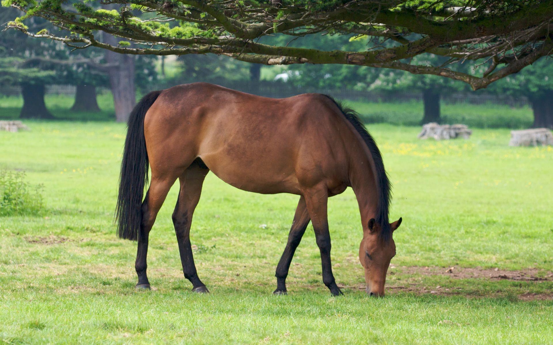 love horses pasture wallpaper - photo #1