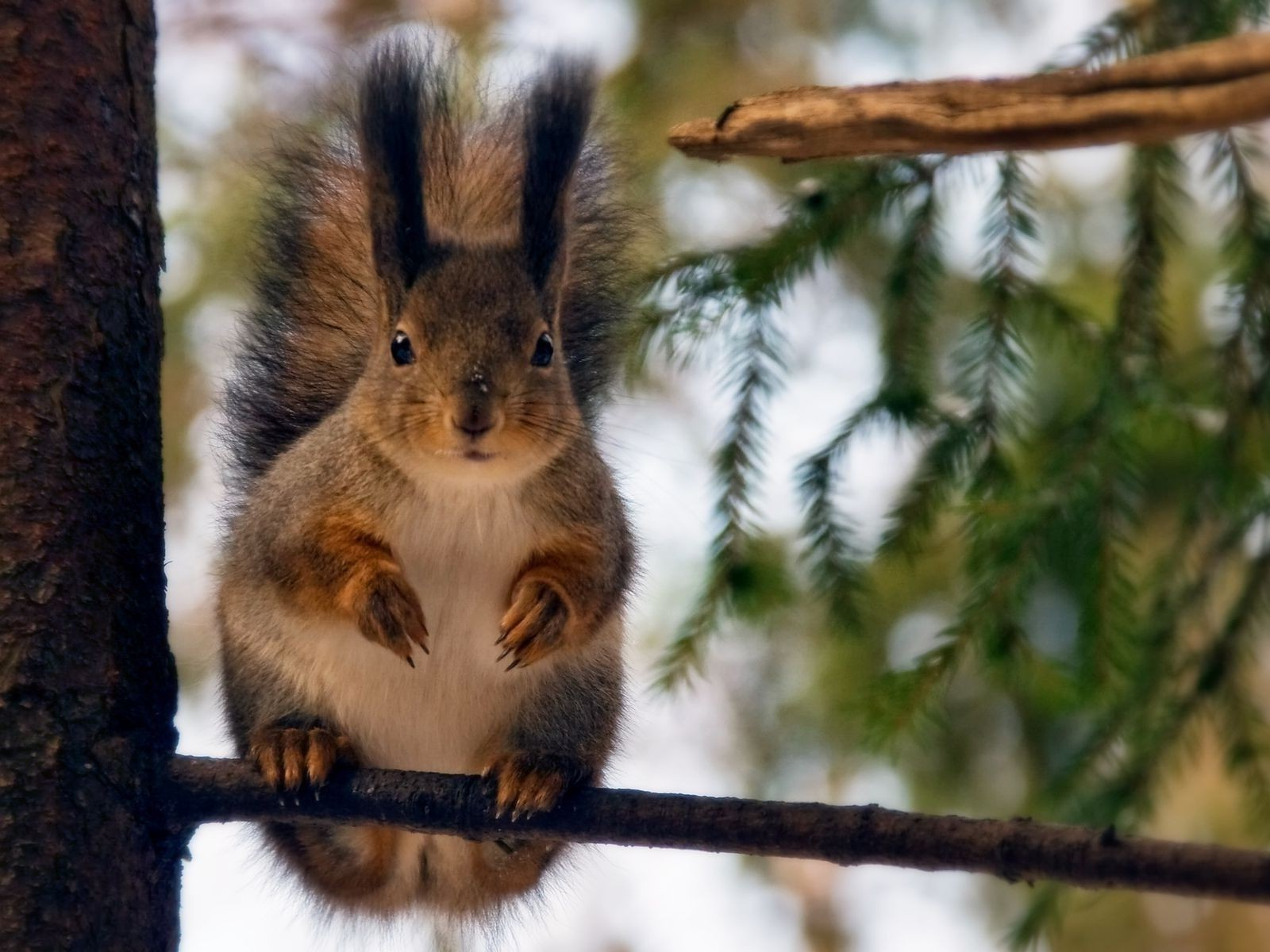 proteins tree mammal squirrel wildlife rodent nature portrait wood nut cute fur animal outdoors wild