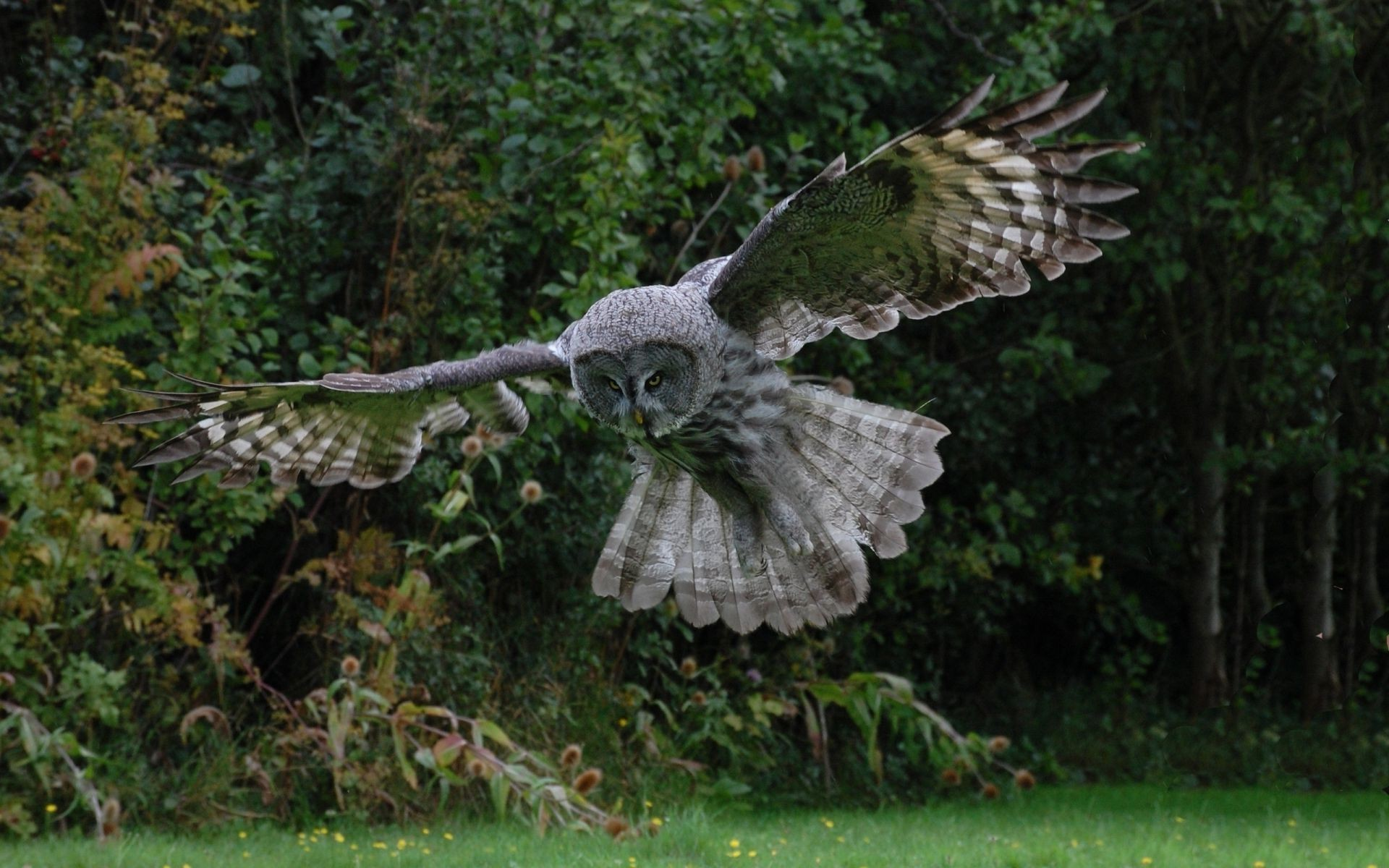 flying Bird feathers wings owl