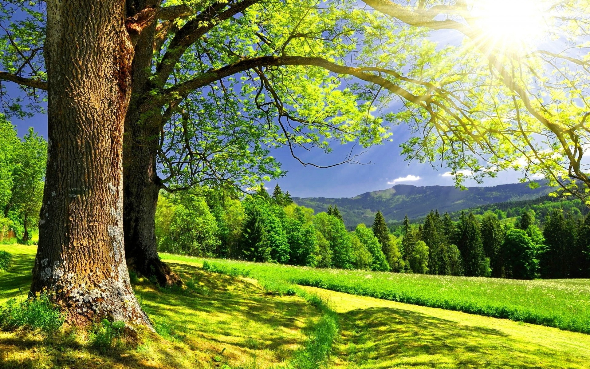 landscapes nature wood landscape tree leaf season rural fair weather park scenery scene grass fall bright scenic sun summer countryside outdoors environment hi res background trees forest hills