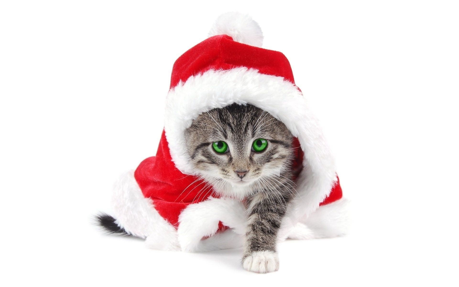 new year cute fur funny little winter downy christmas