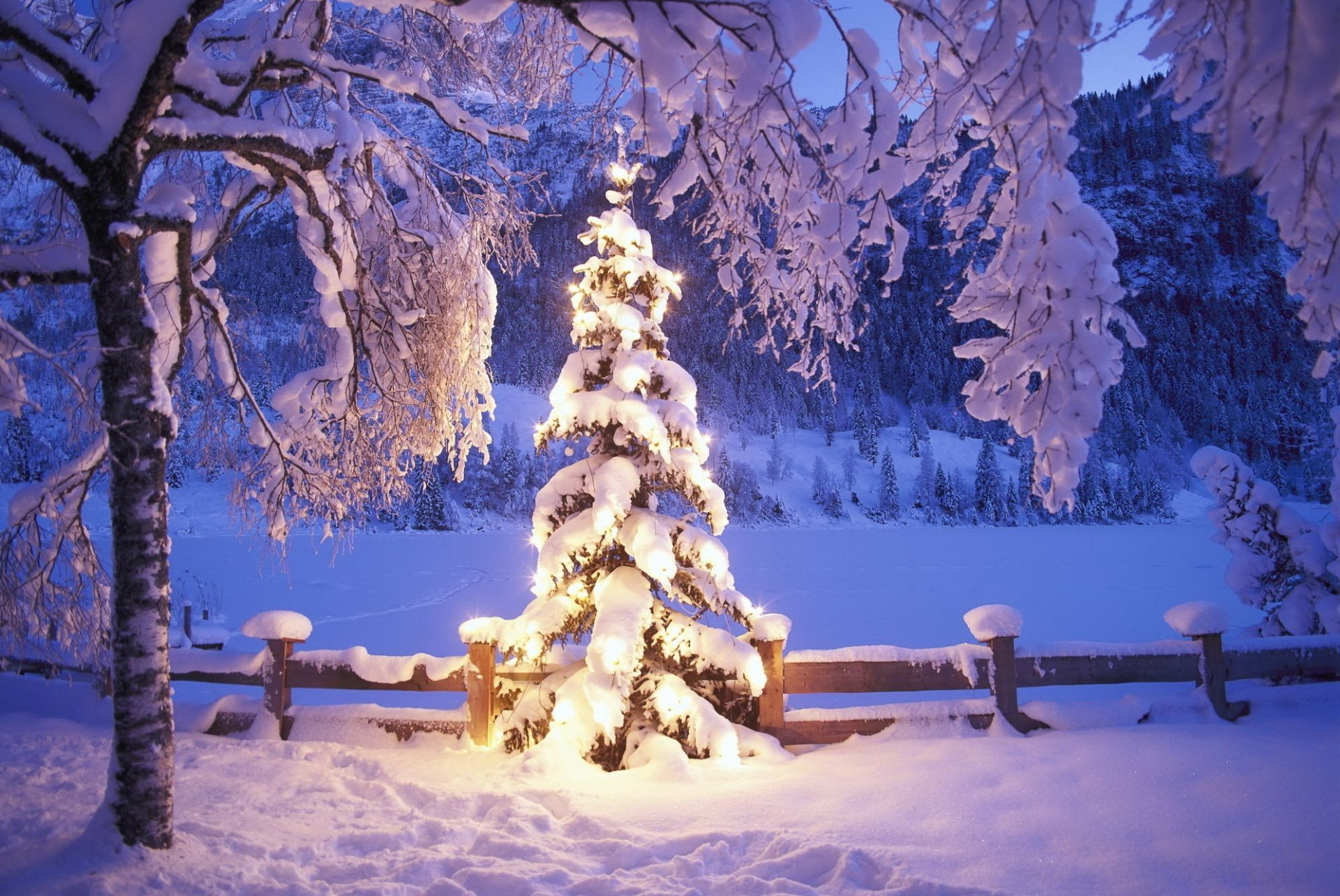 The Christmas Tree Lights Winter Snow IPhone Wallpapers For Free
