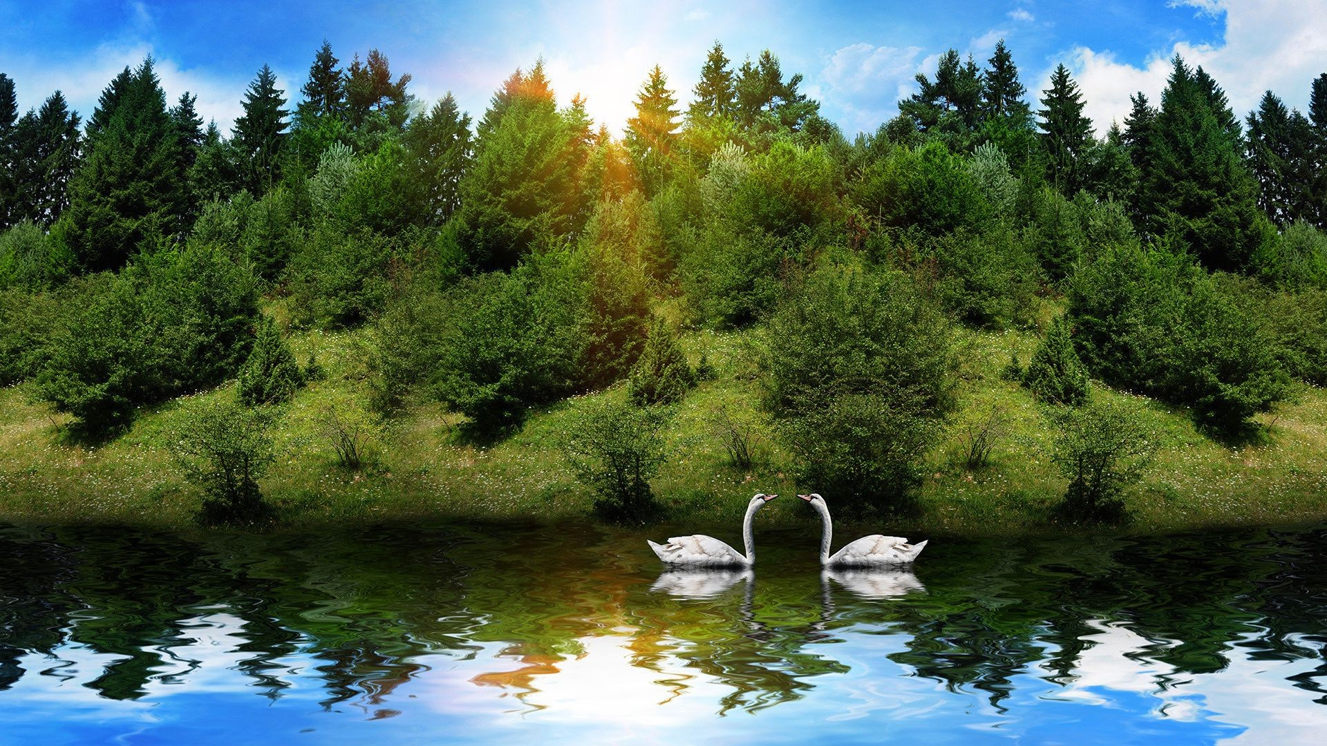 animals water lake river nature landscape tree wood park outdoors scenic summer travel beautiful leaf pool sky reflection fall mountain