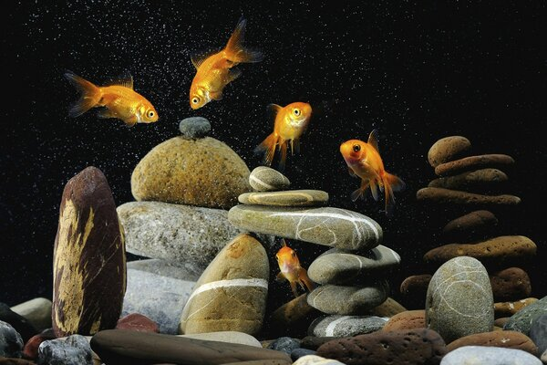 Gold Fishes Life