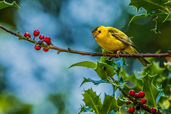 Cute Little Yellow Bird