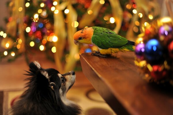 Parrot and Dog Talking