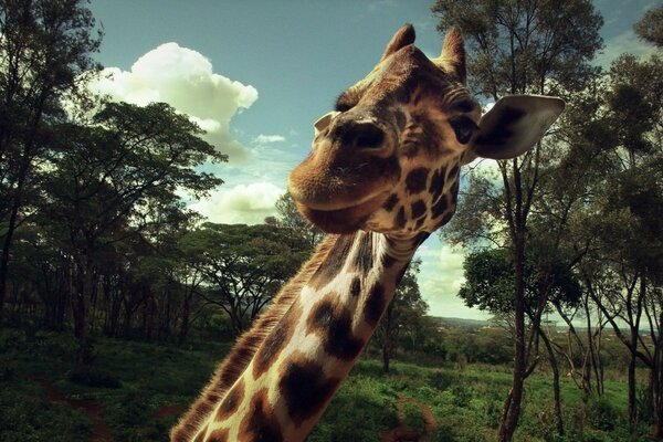 Giraffe neck is the macro surprise delight the animal meeting