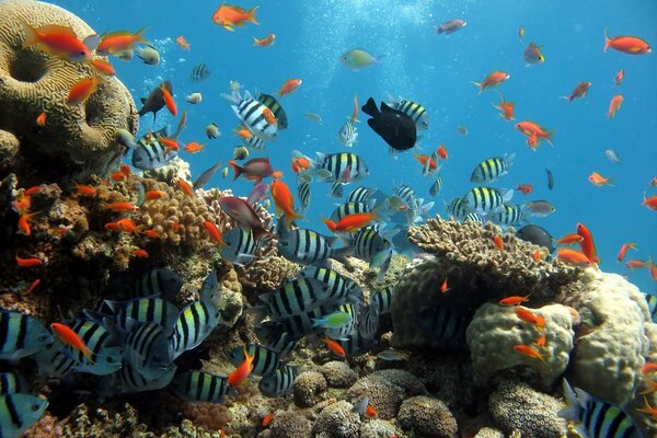 aquarium fishing diving corals fish Fish sea the ocean