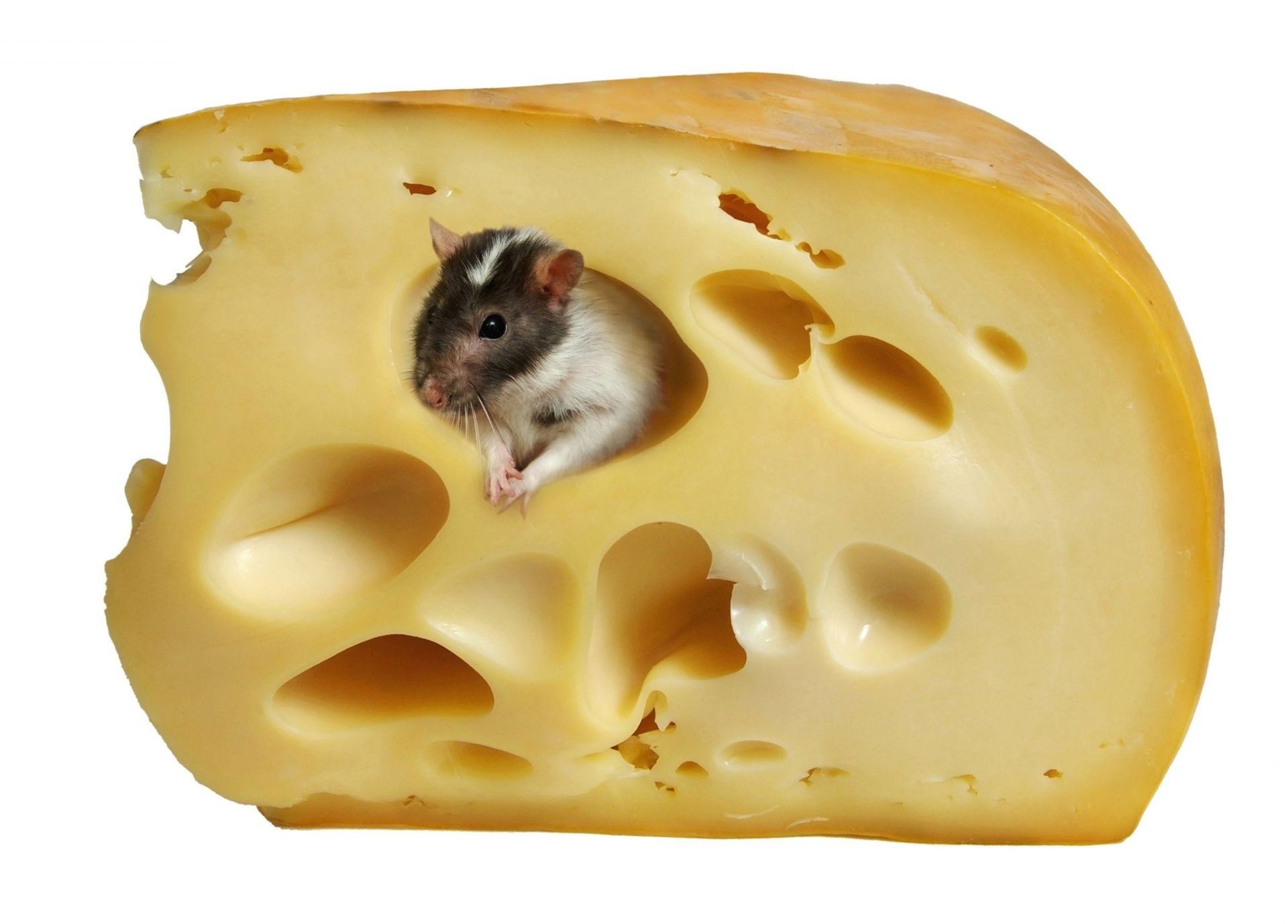 сыр для мыши фото