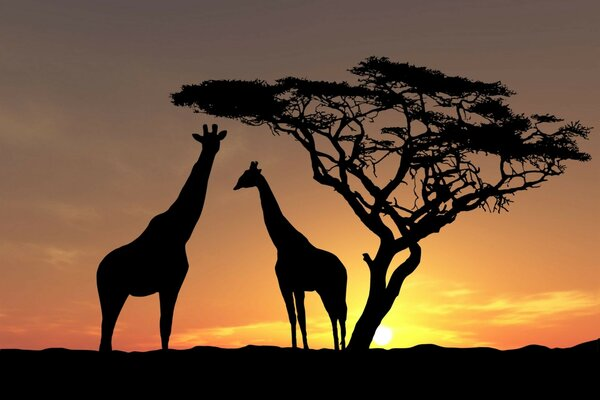 trees photo Africa wild nature the sun, the sky Animals
