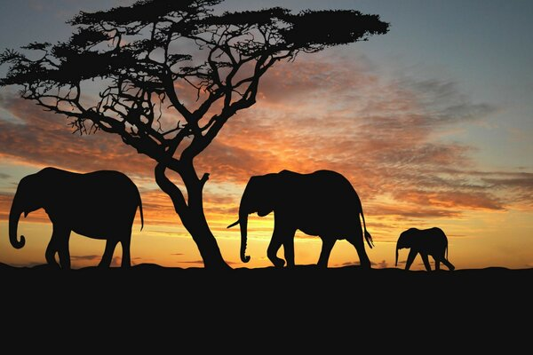 trees evening sunset animal elephants the Savannah afri