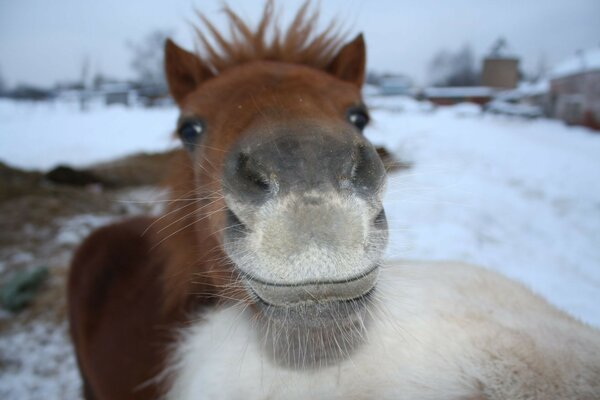 mustache happy red nose Pony winter grey