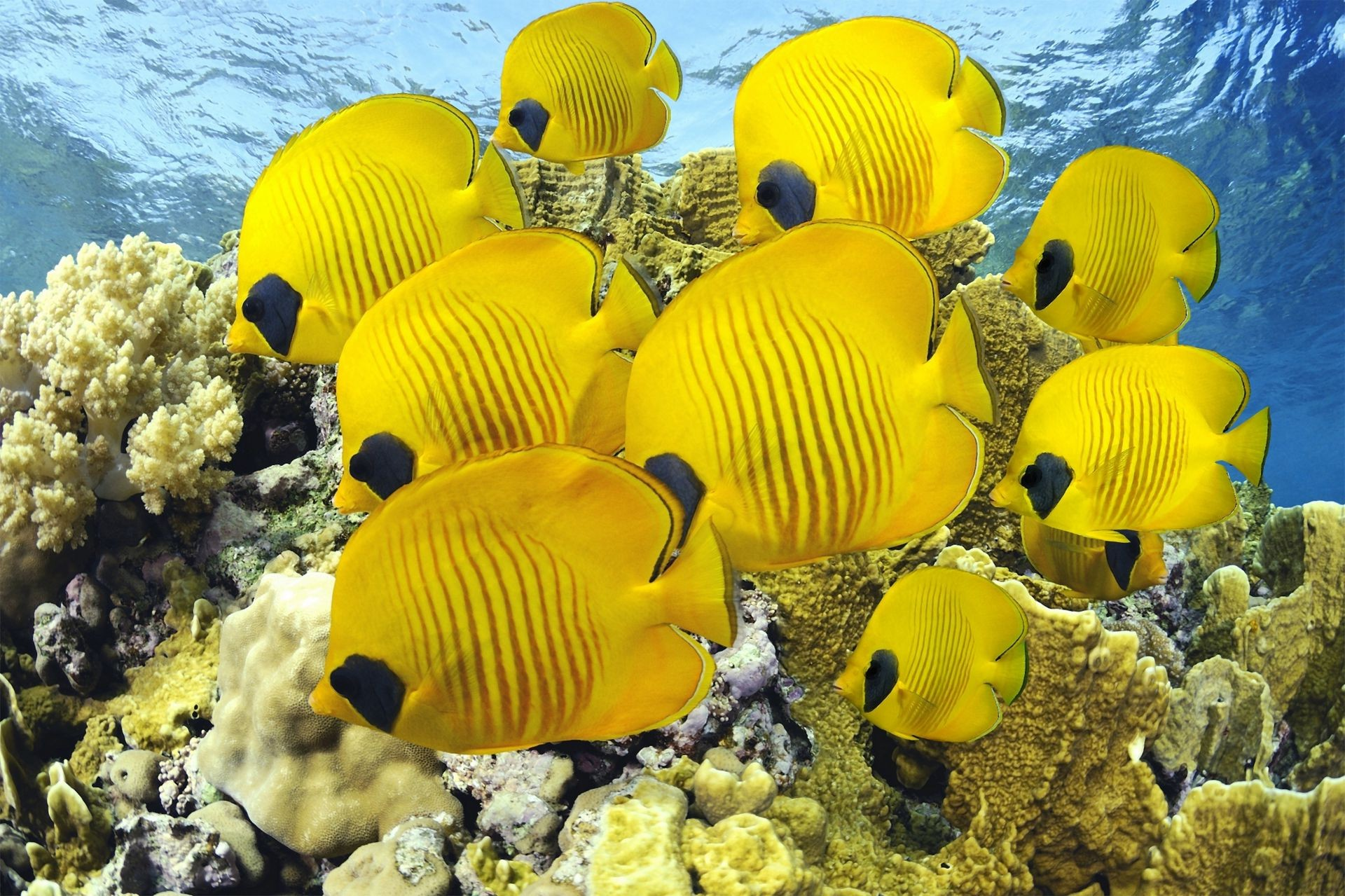 animals underwater ocean water sea tropical nature fish coral travel fair weather color reef summer