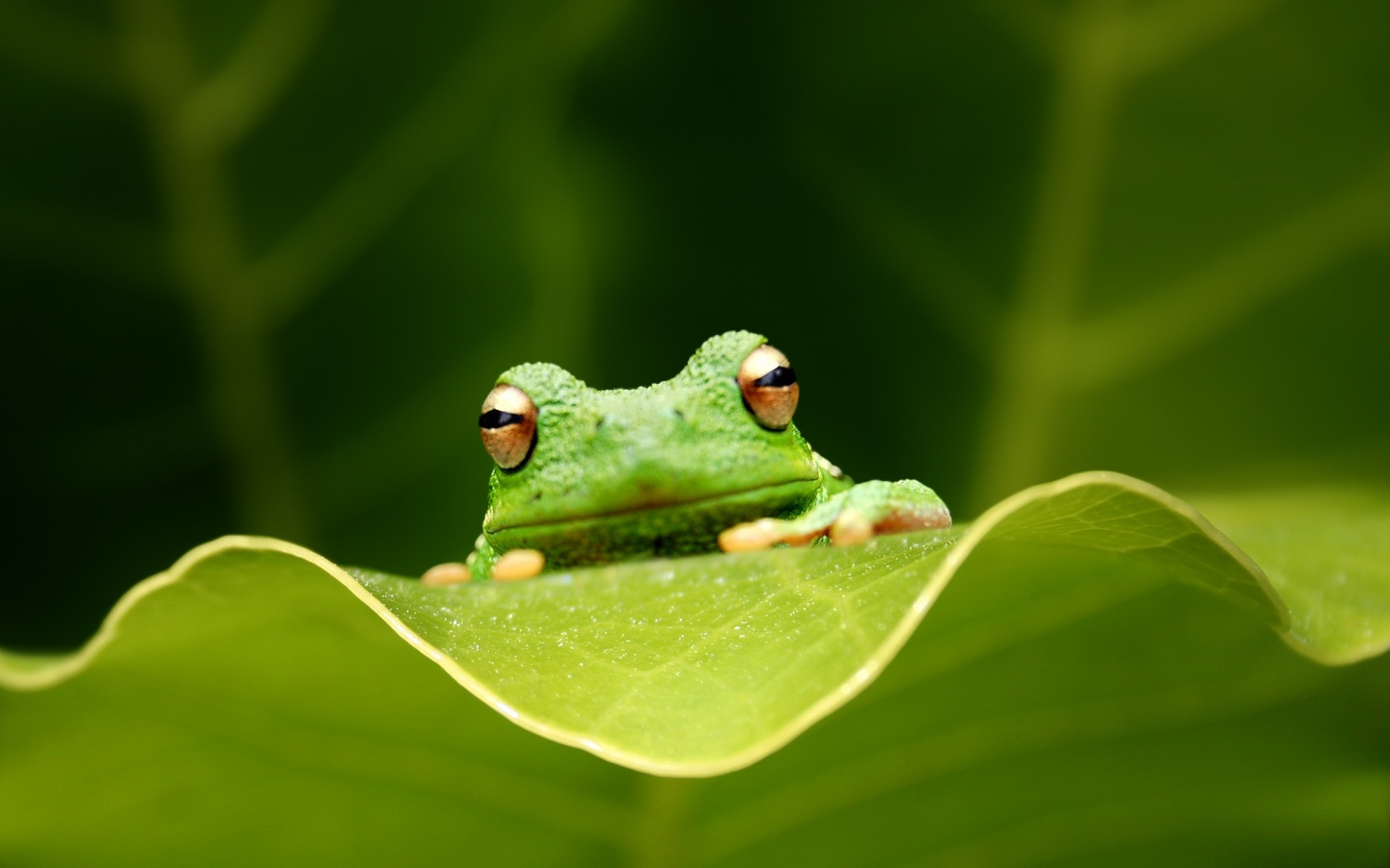Лягушка бабочка на травинке загрузить