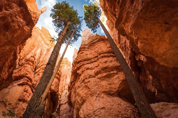 Canyon National Park Bryce Canyon