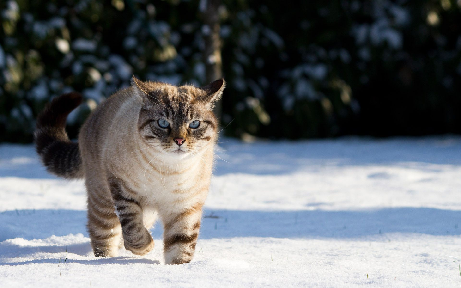 cats mammal cat winter portrait snow pet one animal outdoors nature cute