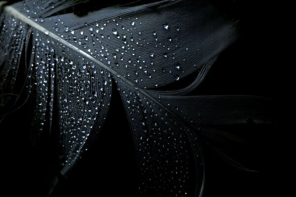 feather background Minimalism black drops