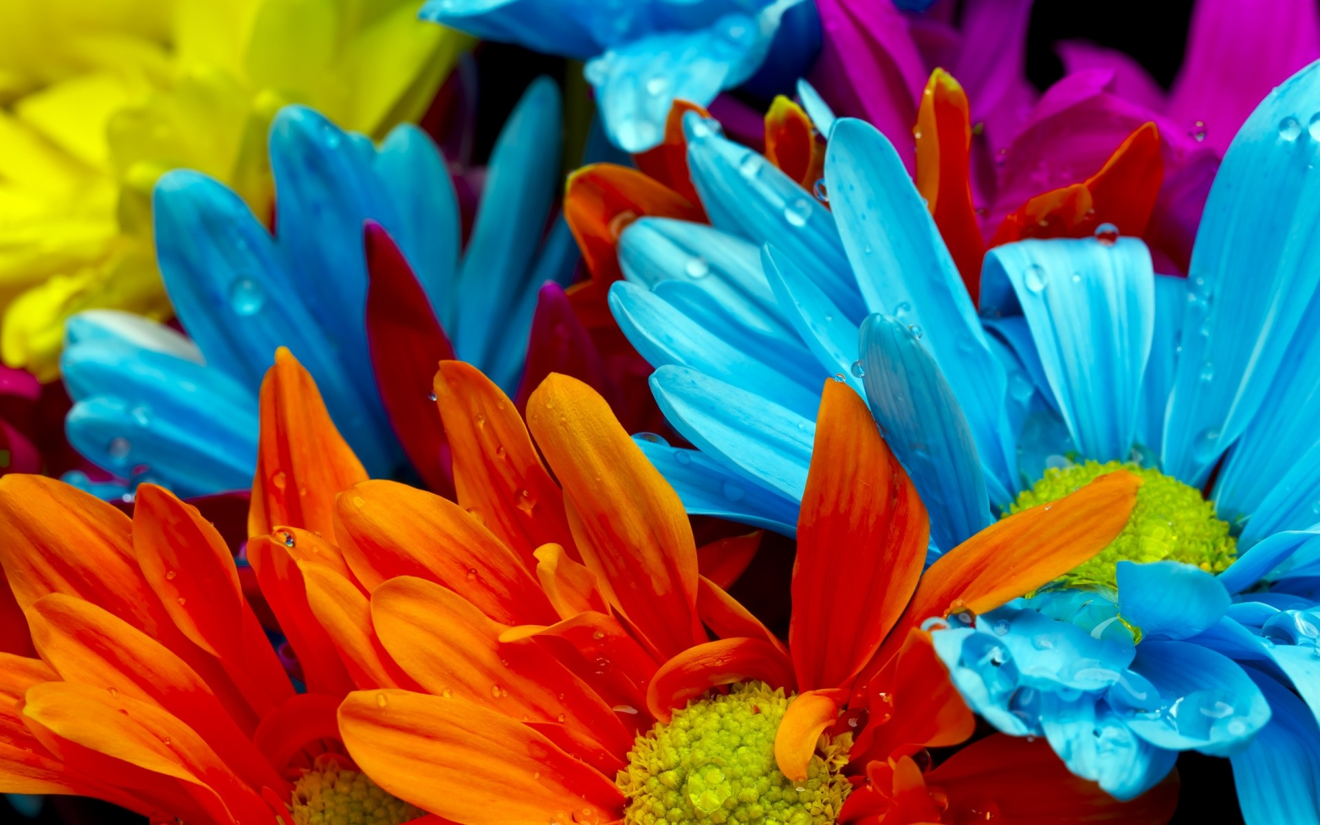 flowers nature flower bright color flora summer garden leaf petal beautiful blooming gerbera