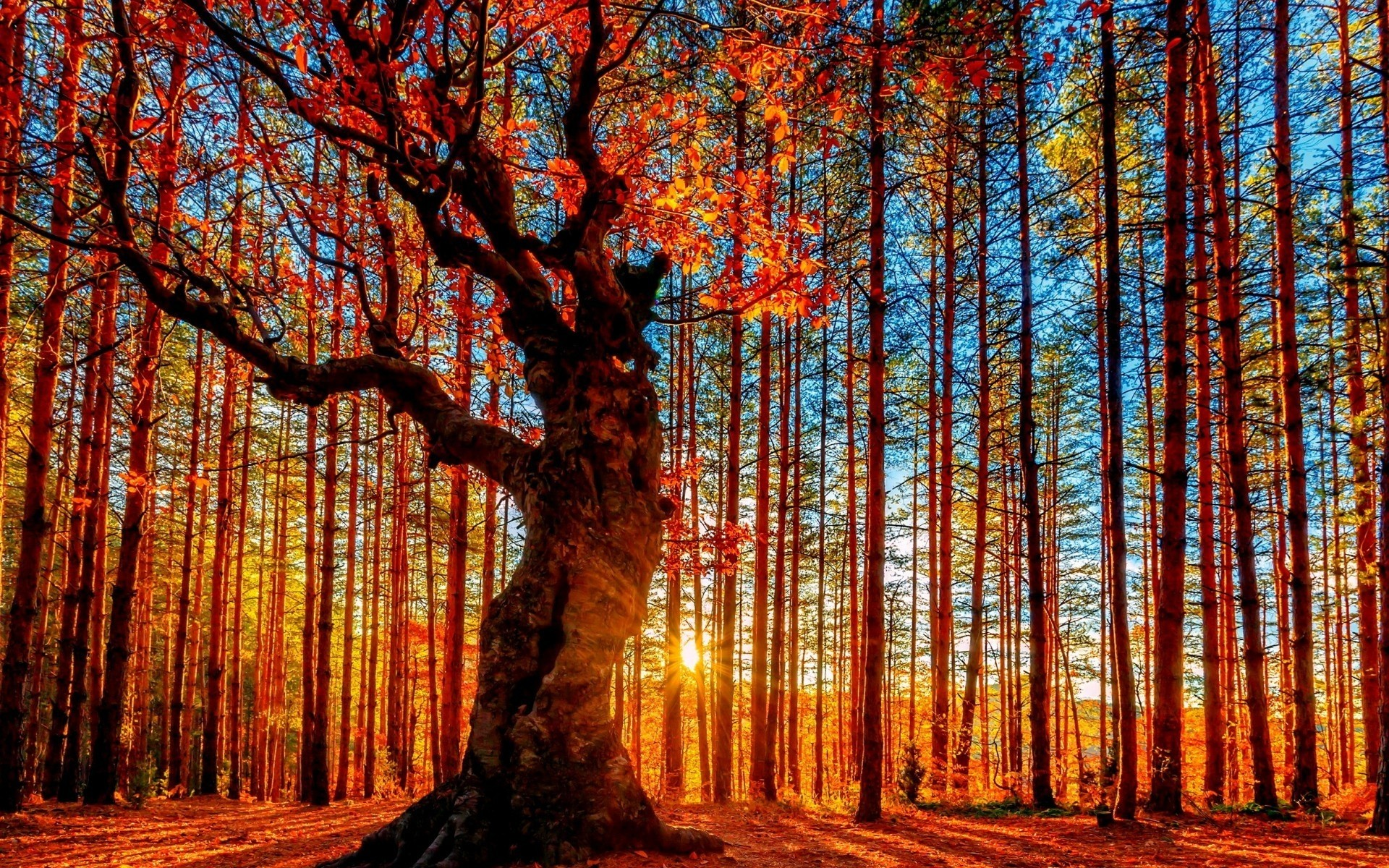autumn wood tree fall leaf nature landscape fair weather park season sun scenic branch bright dawn outdoors light forest lights