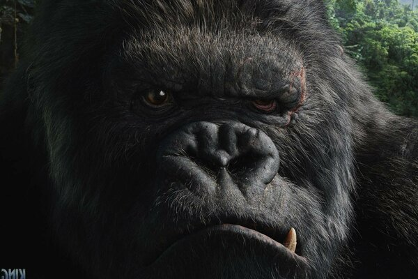 King Kong evil huge hairy monkey king