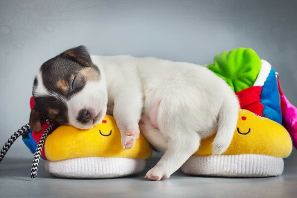 Cute Puppy Sleeping