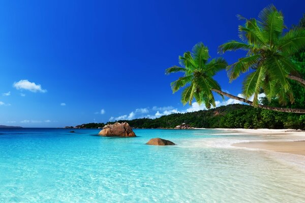 Tropical Island Landscape