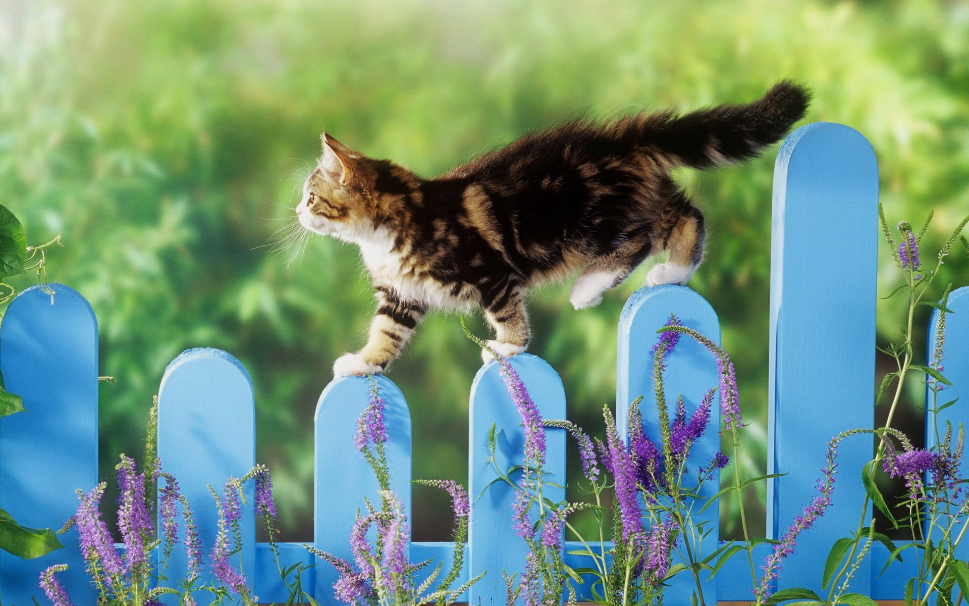 cats nature grass cute outdoors flower cat little summer animal garden