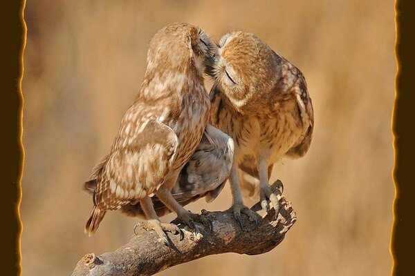 Two birds kissing