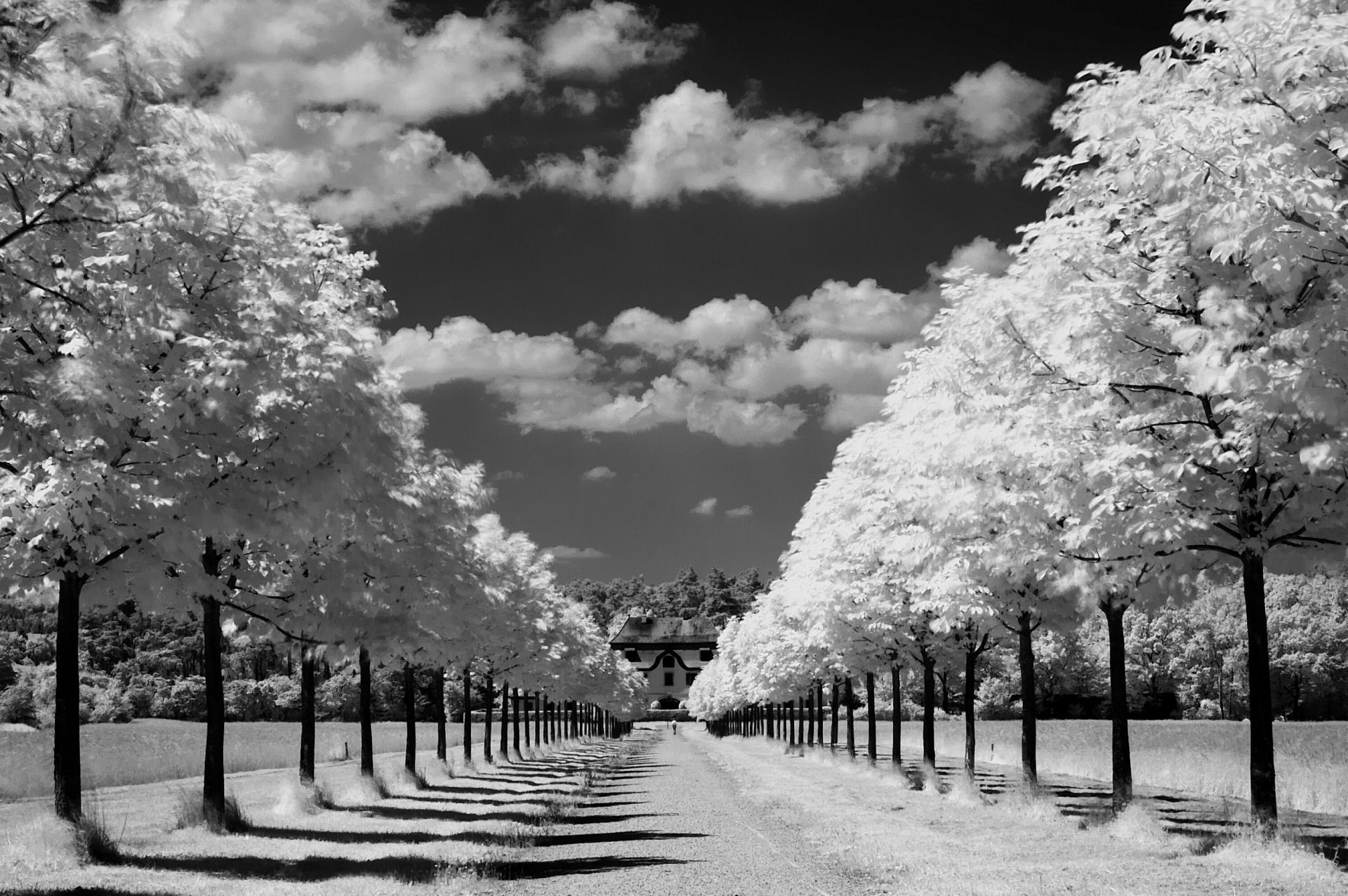 landscapes infrared tree landscape monochrome park snow nature