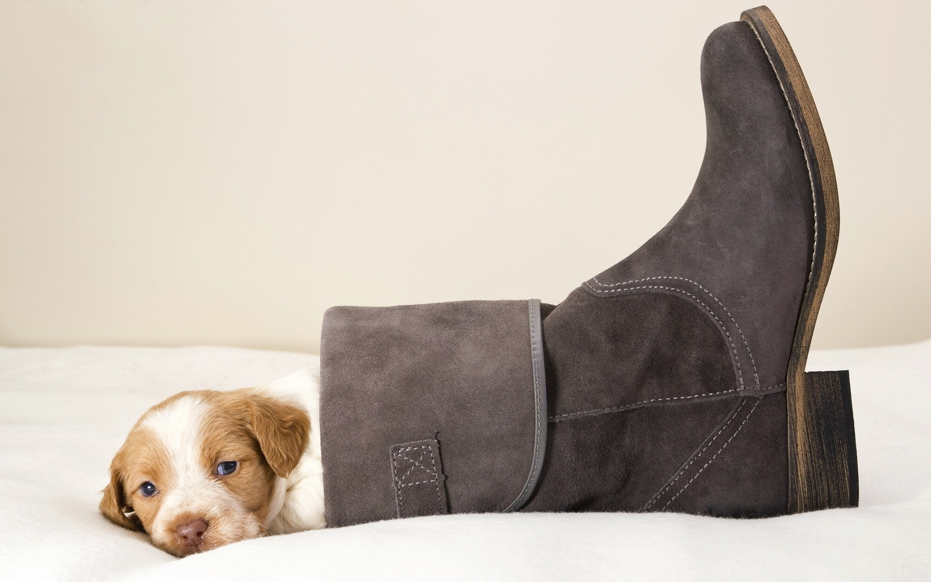 dogs wear dog indoors leather furniture mammal footwear room one seat funny puppy