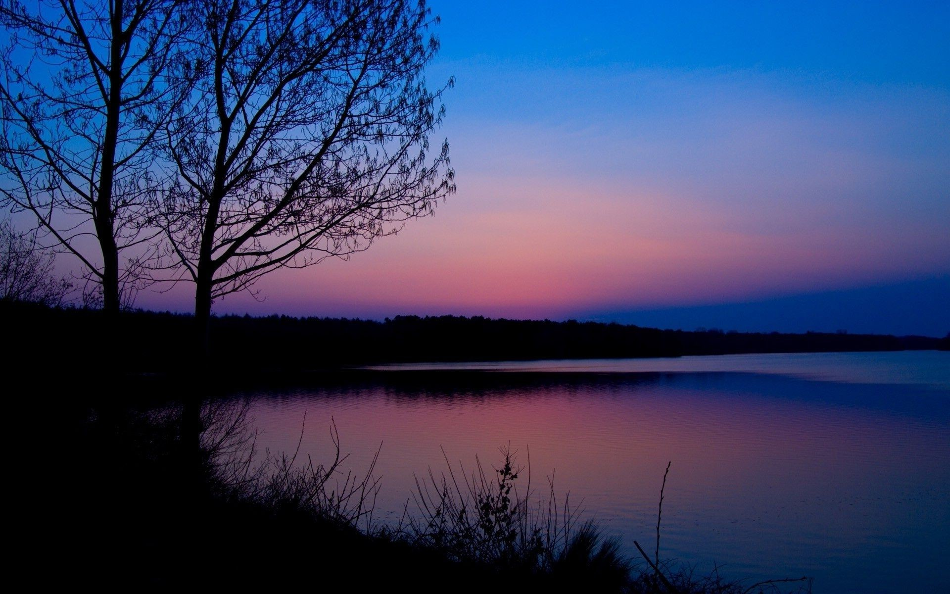 Dawn blue pink forest river