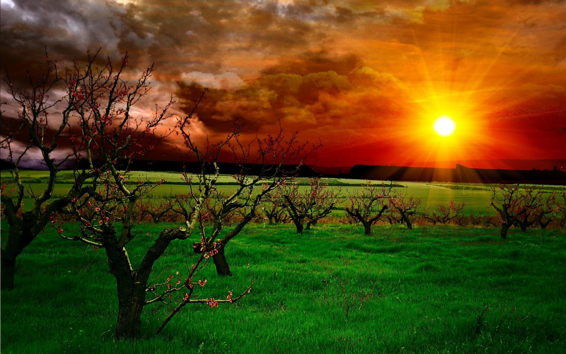 landscapes dawn sunset sun landscape nature grass field tree rural evening fair weather countryside light outdoors farm agriculture hayfield bright hdr garden