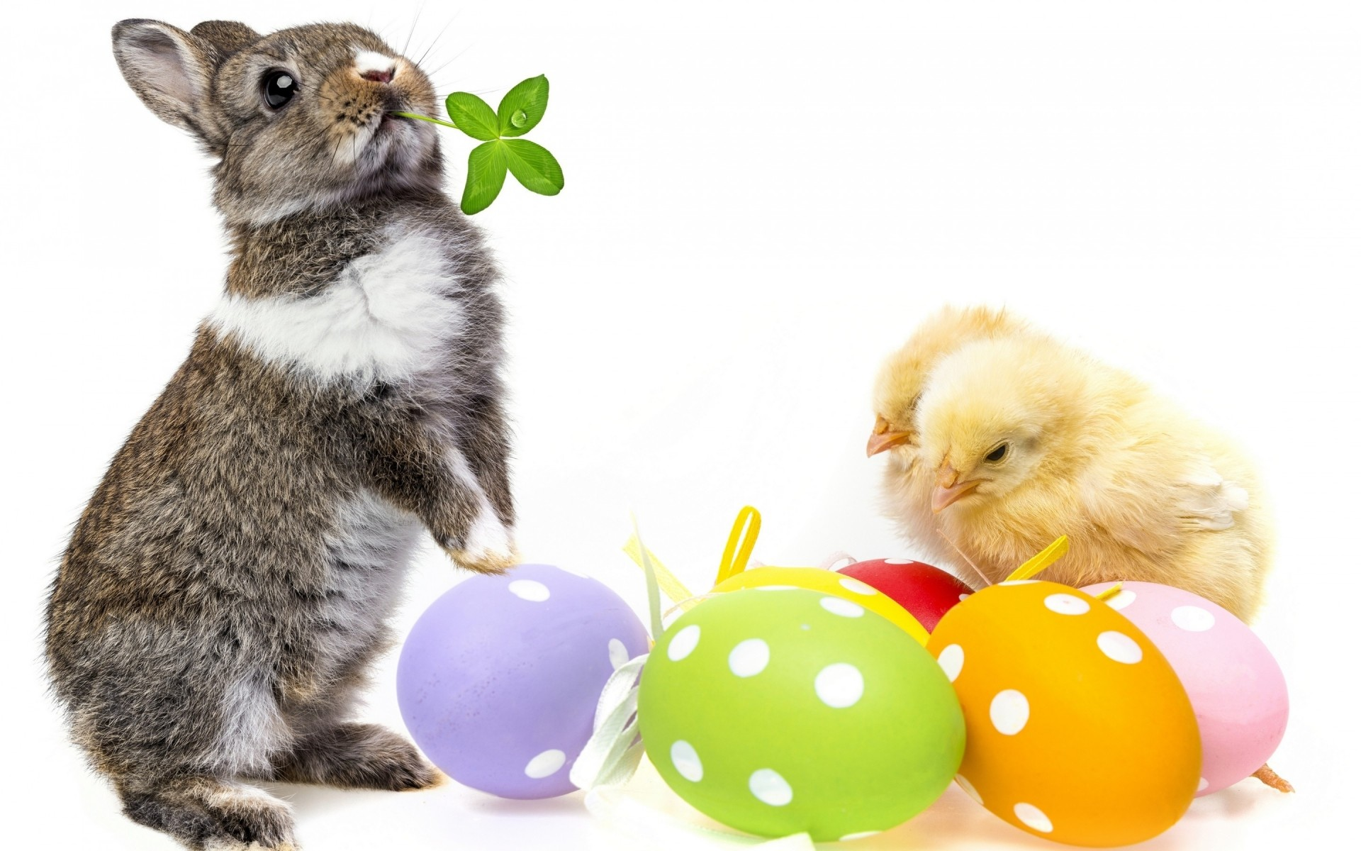 Cute Easter Bunny Free Wallpapers