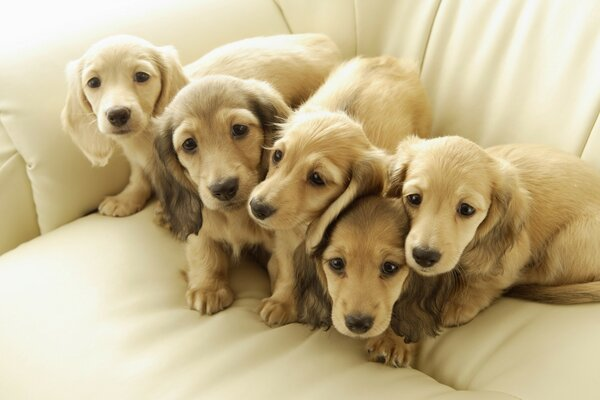 Five Cute Puppies