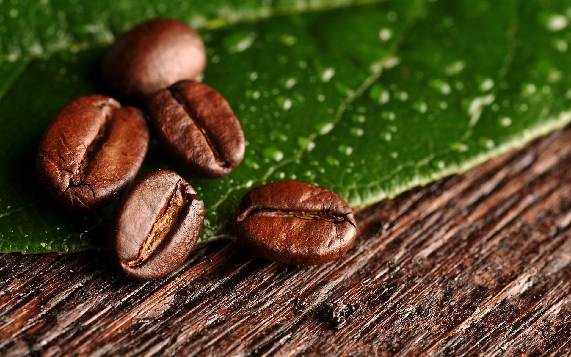 Coffee beans on green leaf
