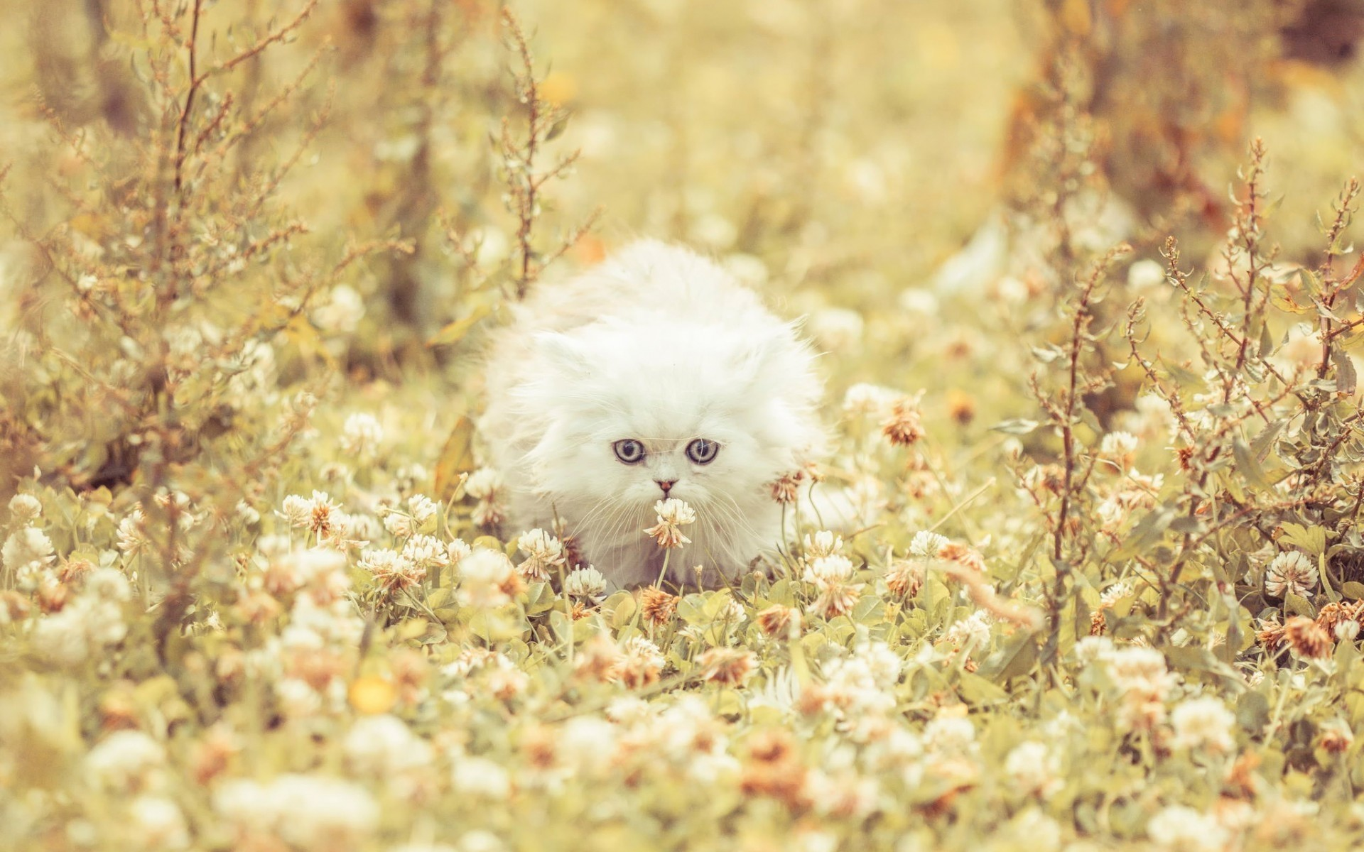 cats nature outdoors little animal wild cute kitty gorgeous cool beautiful