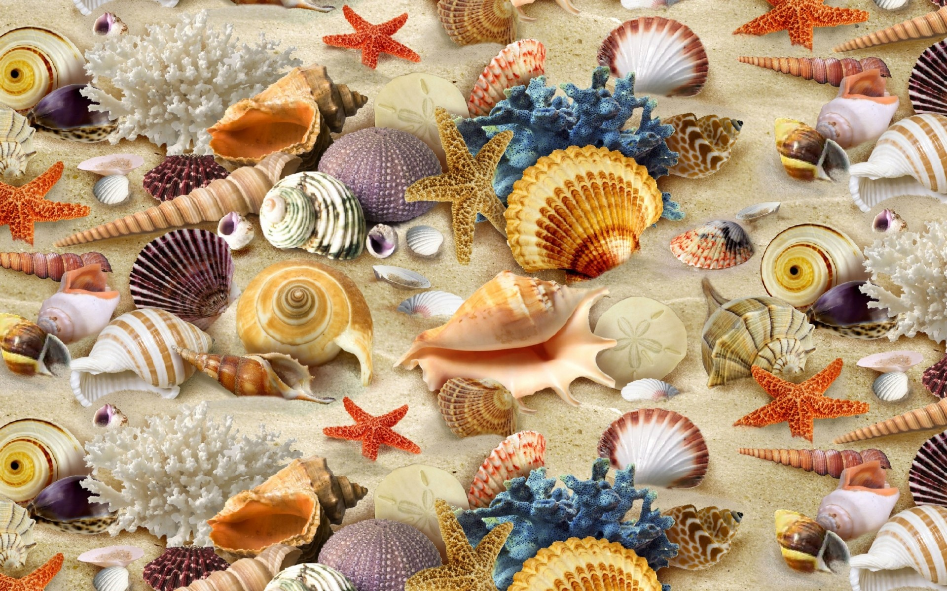 summer seashell starfish shell marine souvenir decoration shellfish sea conch scallop cockle snail desktop clam collection vacation cockleshell beach shells corals sand gorgeous
