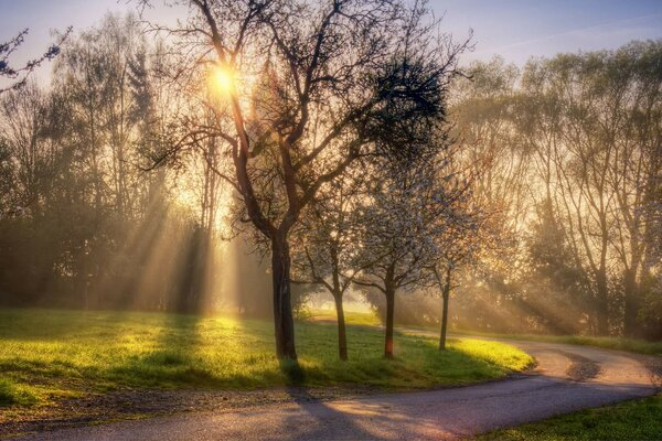 light rays road Nature spring sun