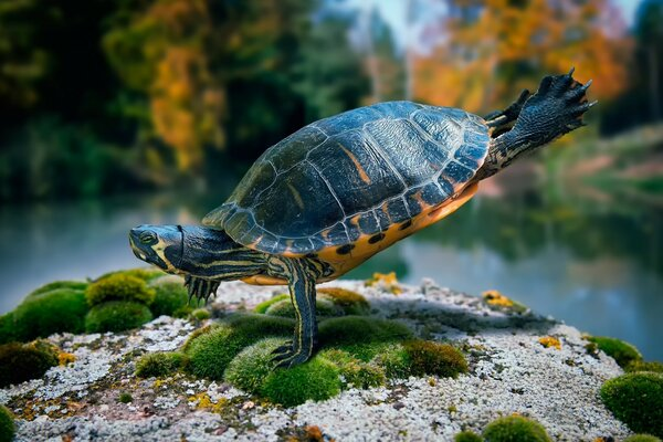 Fit Turtle