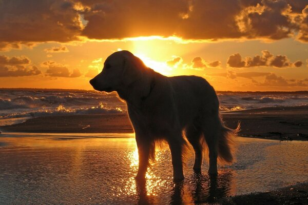 sea water sky sunset Dog