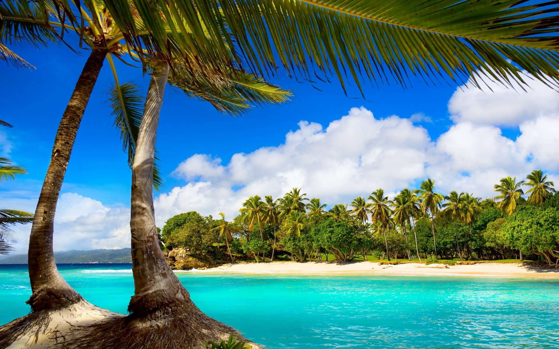 Exotic Palm Beach View Android Wallpapers Free