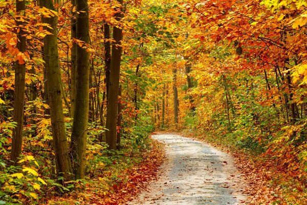 Autumn Forest Landscape Road