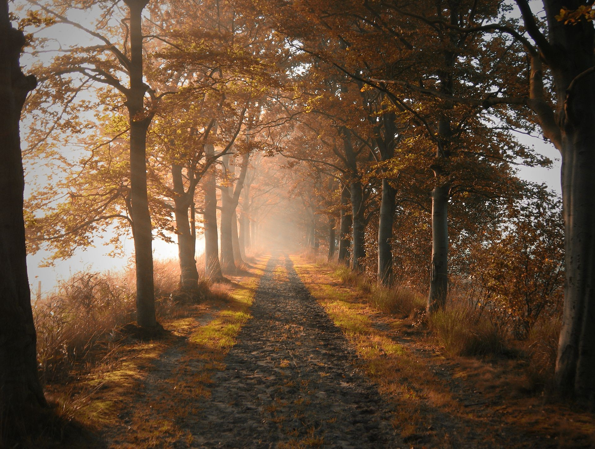 autumn tree fall fog mist dawn landscape wood light leaf alley road park shadow guidance mystery backlit fair weather outdoors nature