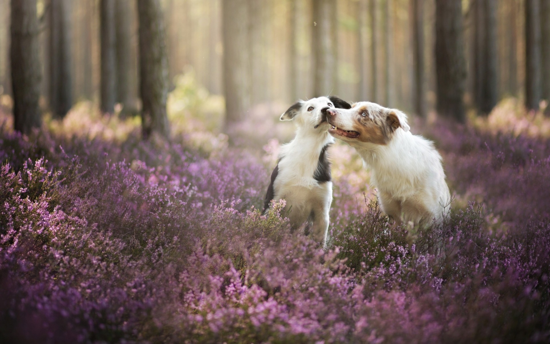 dogs flower nature outdoors grass mammal lavander